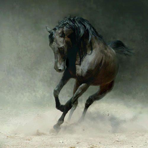 اكبر موسوعة صور خيول اروع صور الخيول العربيه صور خيول اجمل صور خيول صور حصان Horses Horse Wallpaper Pretty Horses