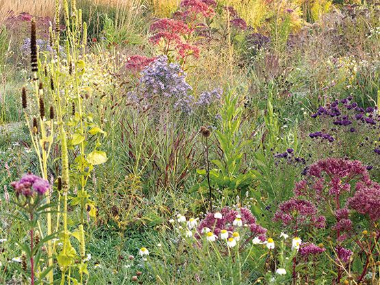 Perennials arise out of wild grasses and spontaneous flora in the new perennial meadow at Hummelo in the Netherlands. Photo: