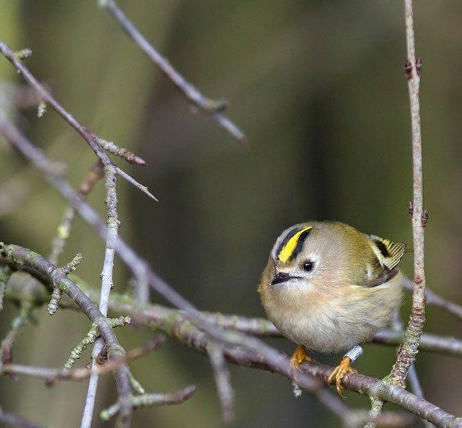 Photo by Adri de Groot (Vogeldagboek)