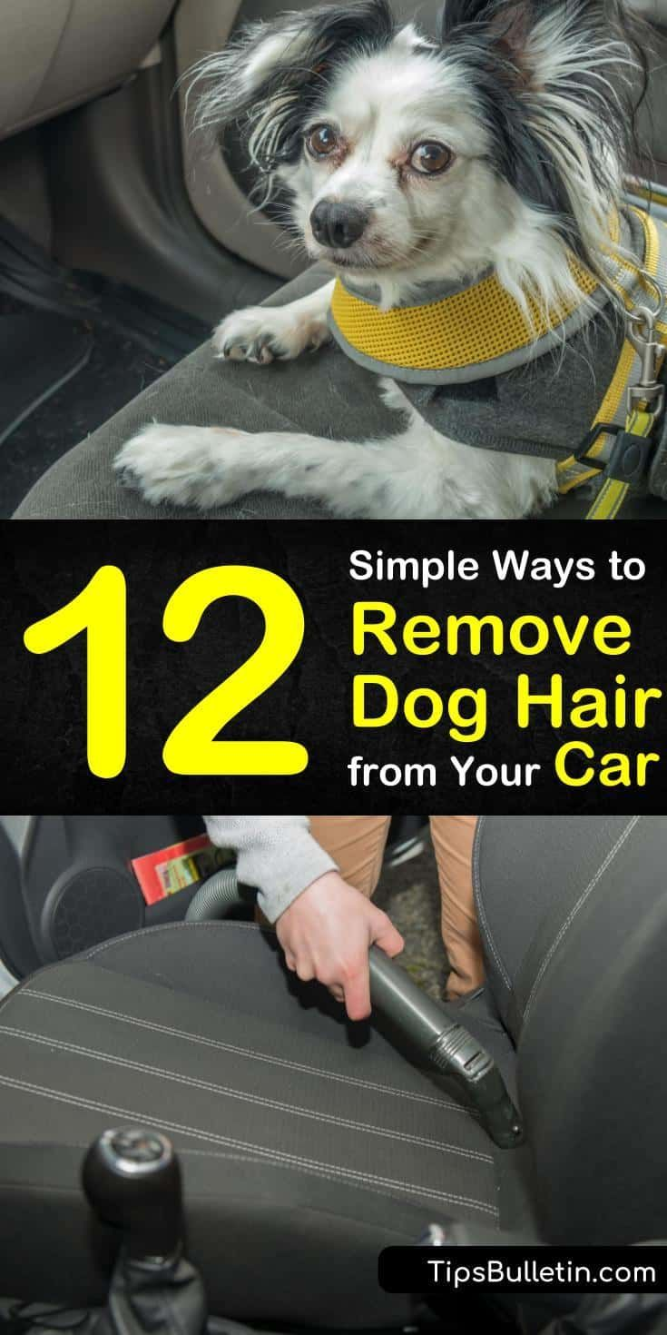12 simple ways to remove dog hair from your car dog hair