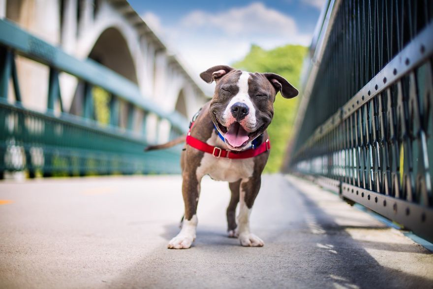 Dog Photographer Of The Year Contest Announces The Winners And