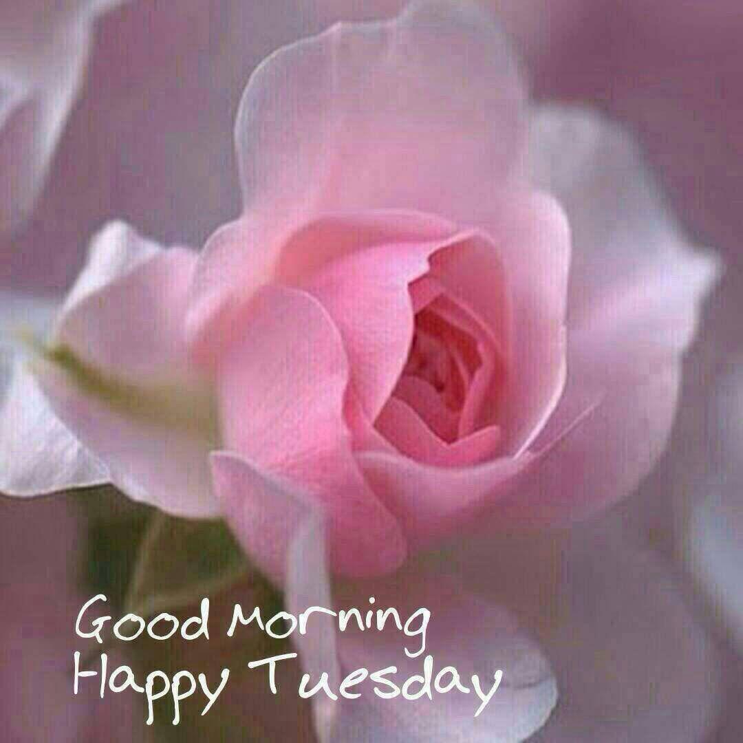 Good morning Tuesday | Good morning tuesday, Tuesday