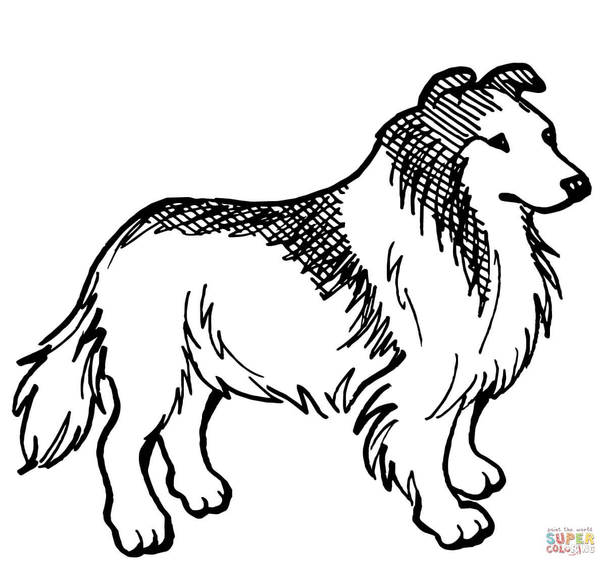 Rough Collie Dog Dog Coloring Page Dog Coloring Book Collie Dog