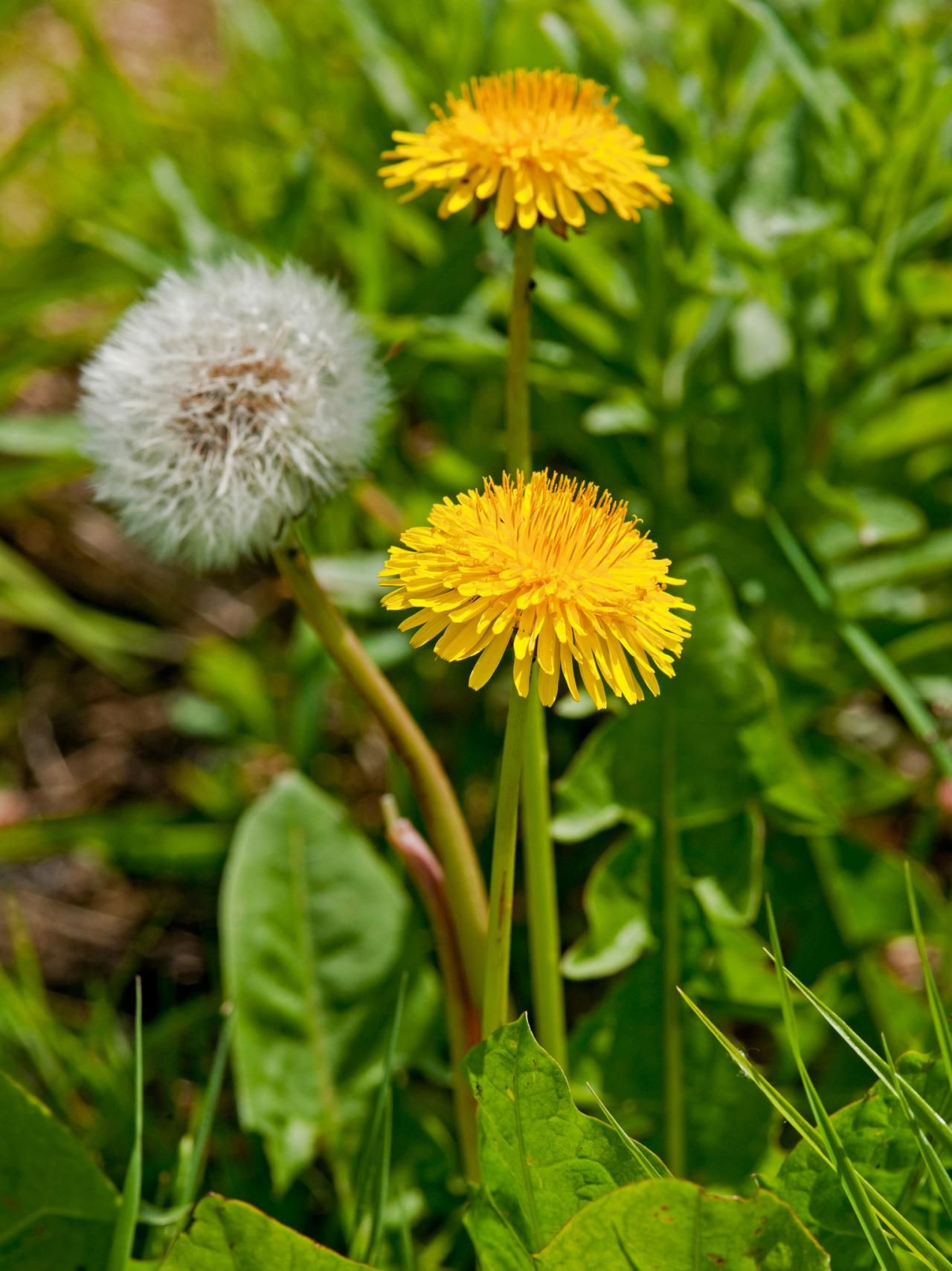 How To Control Lawn Weeds Bushes Shrubs And Plants Pinterest