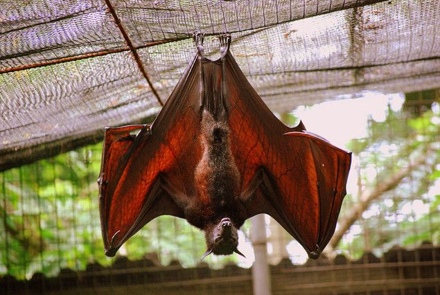 In China Red Bats Are Symbols Of Long Life And Amulets Are Worn As