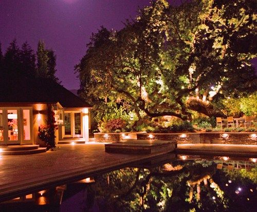 Tree Oak Lights Pool Lighting Aesthetic Gardens Mountain View