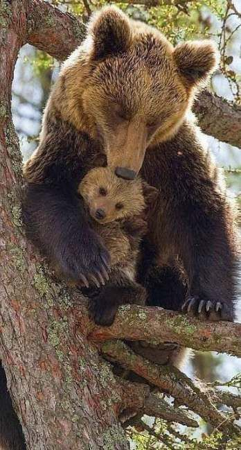 Trendy baby animals and their mothers beautiful cr #Animals #Baby #baby_animals_and_their_mothers #Beautiful #Creatures #ideas #Mothers #Trendy