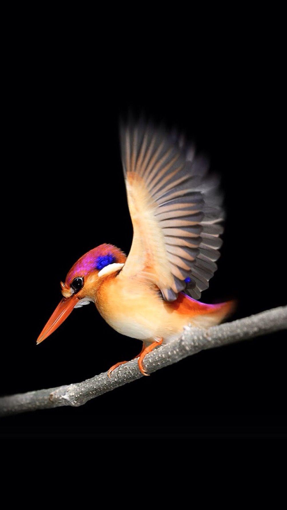 Обои Птичка, семена. Животные foto 13