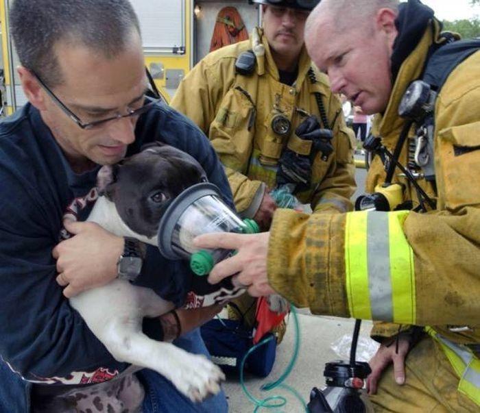 спасатели животных фото исходя