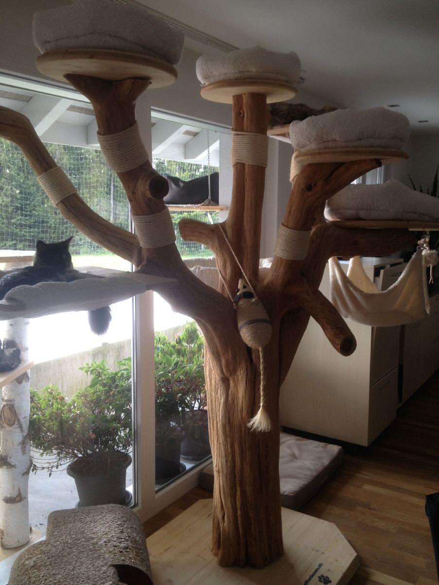 maine coon world - naturkratzbäume | arbres à chats | chat