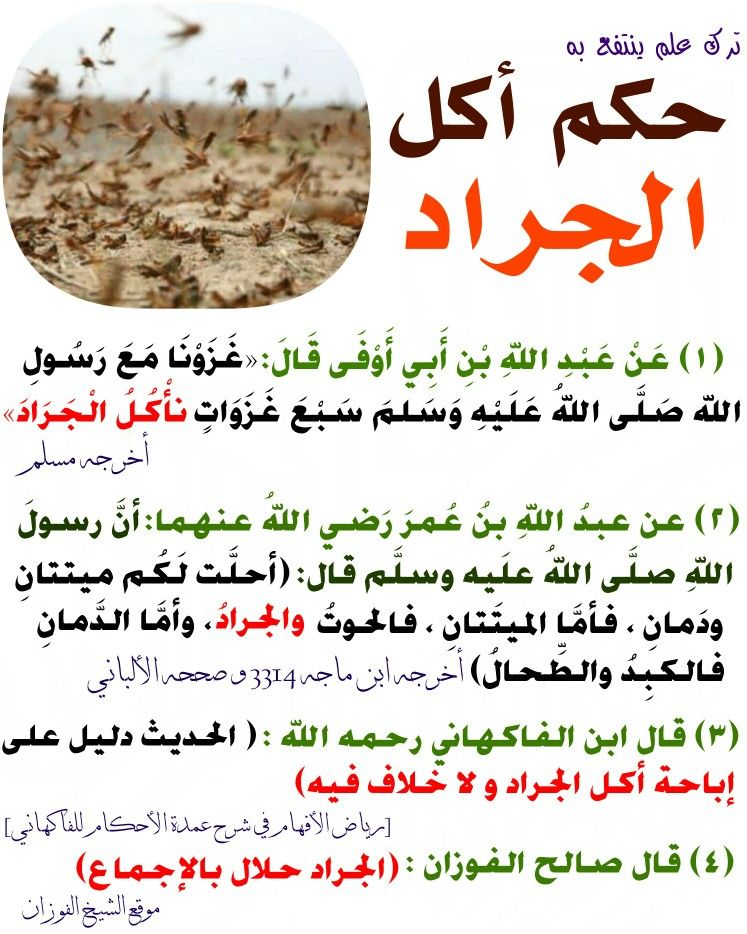 حكم أكل الجراد Funny Arabic Quotes Islamic Quotes Hadith