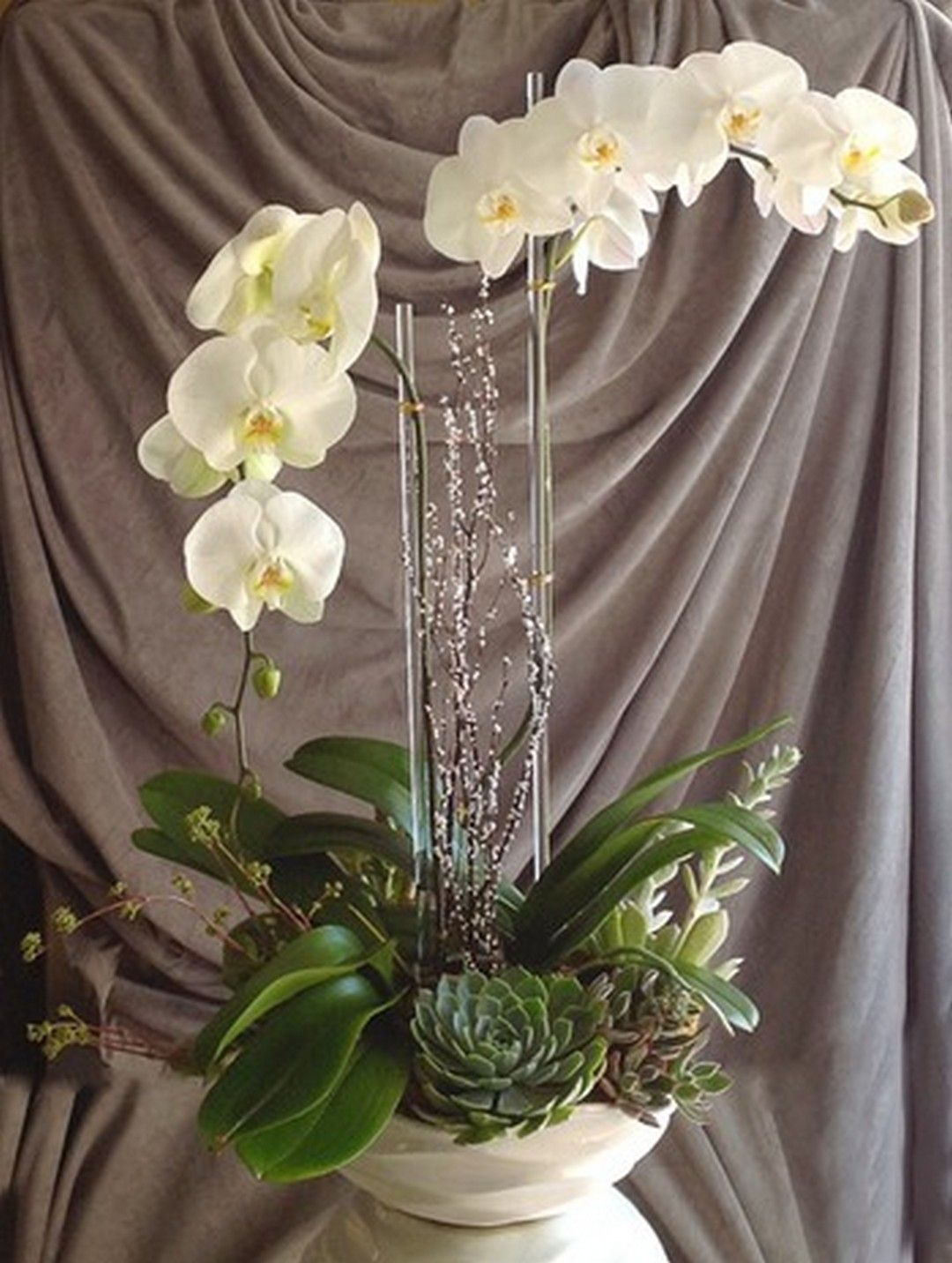 best orchid arrangements with succulents and driftwood