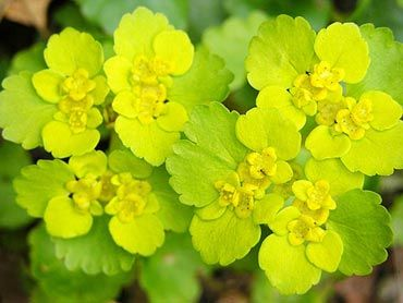 Yellow green flowers stock flower images pinterest green yellow green flowers mightylinksfo