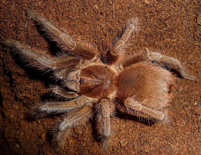 7c80f991254bad7570ff72a5dcafc01b - How To Get Rid Of Crab Spiders In Hawaii