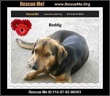 Florida Beagle Rescue Adoptions Rescueme Org Beagle Rescue