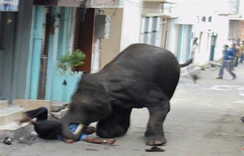 Wild Elephant kills Man in Nepal India