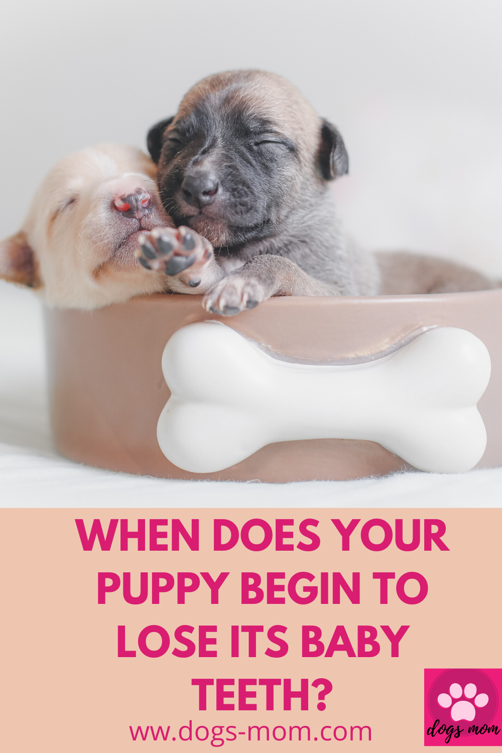 Pin On Puppy Training Tips