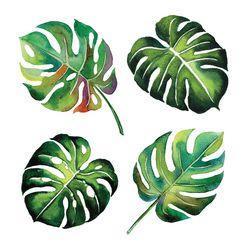Tropical Split Leaves Plant Botany Watercolour Object Leaf Painting On White Background Illustration Tropikal Suluboya Yaprak