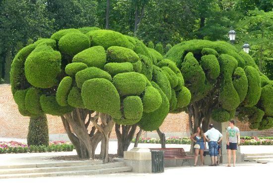 Unusual Trees Picture Of Madrid Community Of Madrid