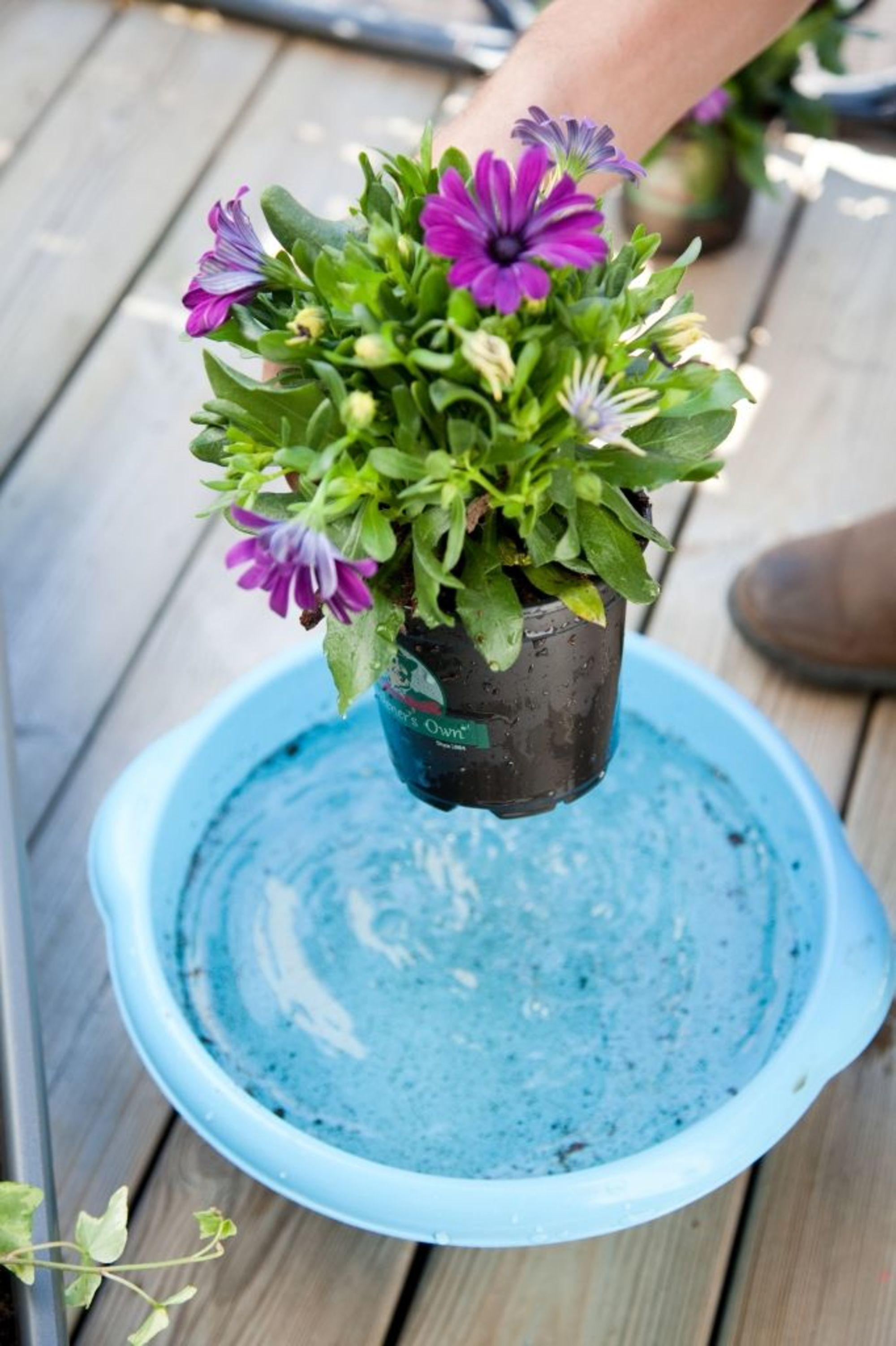Composer une jardinière de fleurs sur son balcon Fleur