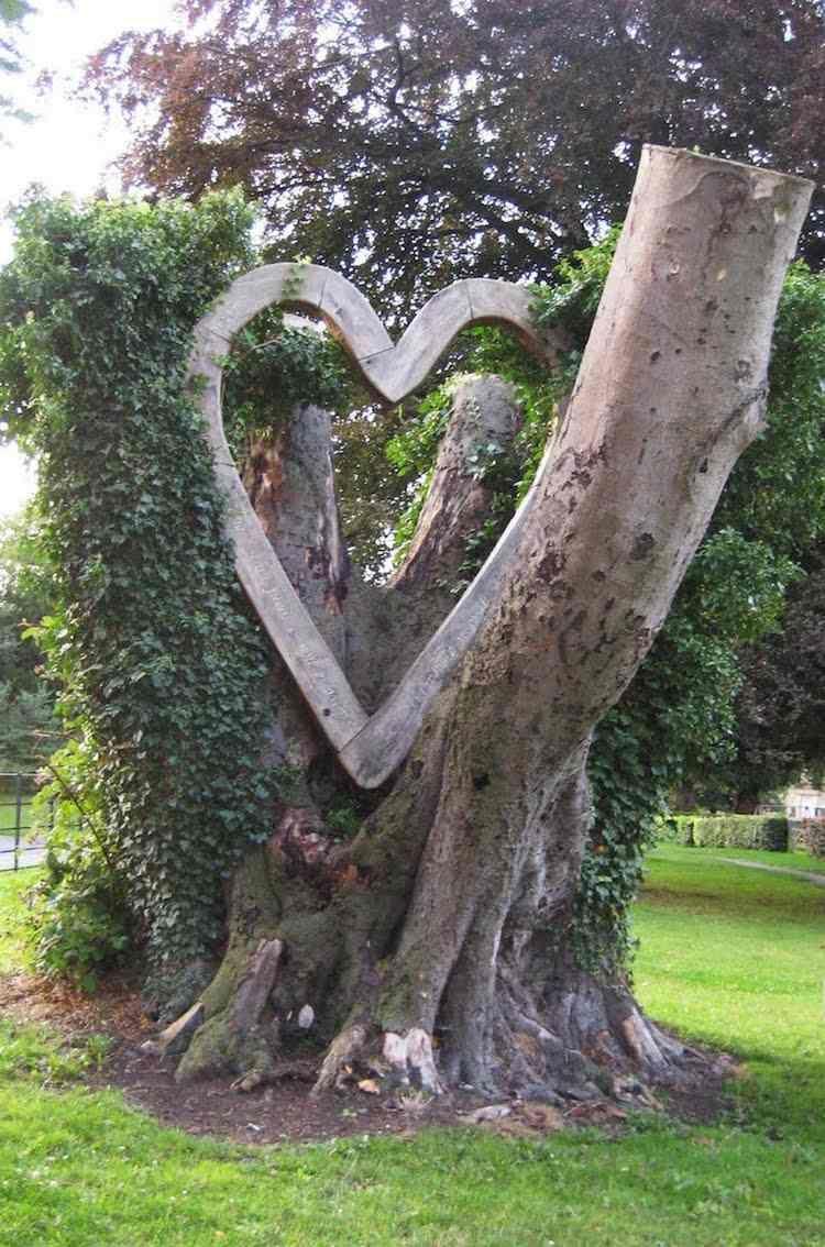 Arbre mort bois flott et souche d 39 arbre pour d corer le jardin souche sculpture bois et tronc - Souche d arbre decorative ...