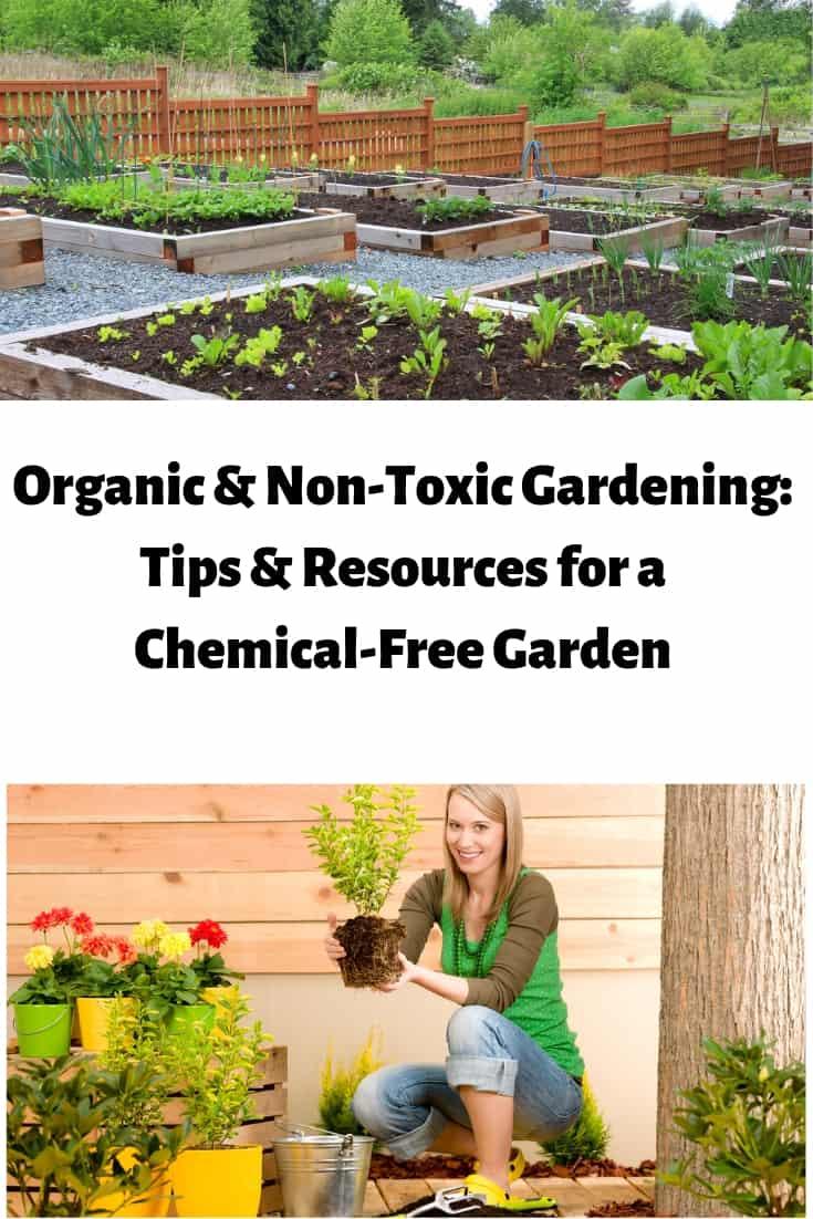 Organic Non Toxic Gardening How To Have A Chemical Free Garden Organic Vegetable Garden Organic Gardening Healthy Garden