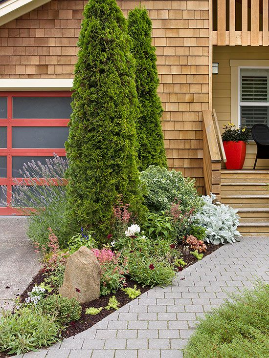 Fast Growing Evergreen Trees To Quickly Transform Your 400 x 300