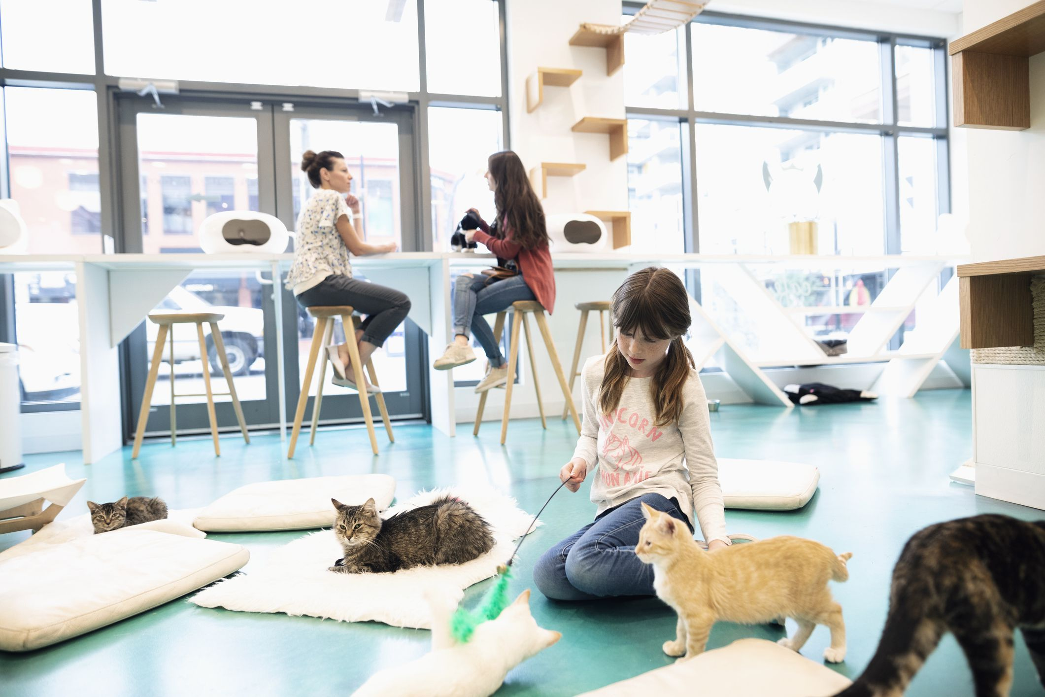Here are some tips on how to open a cat cafe, a cross