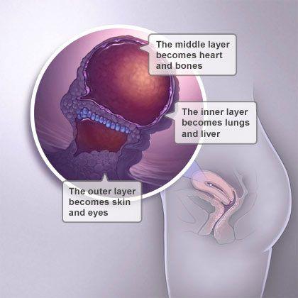 Pregnant weeks at 4 Pregnant Symptoms