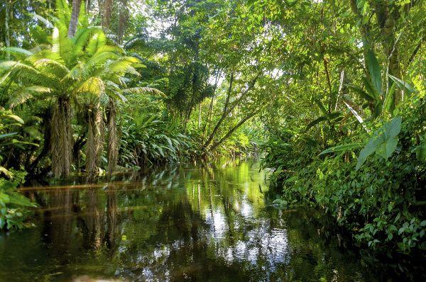 Zvieratá Amazónie