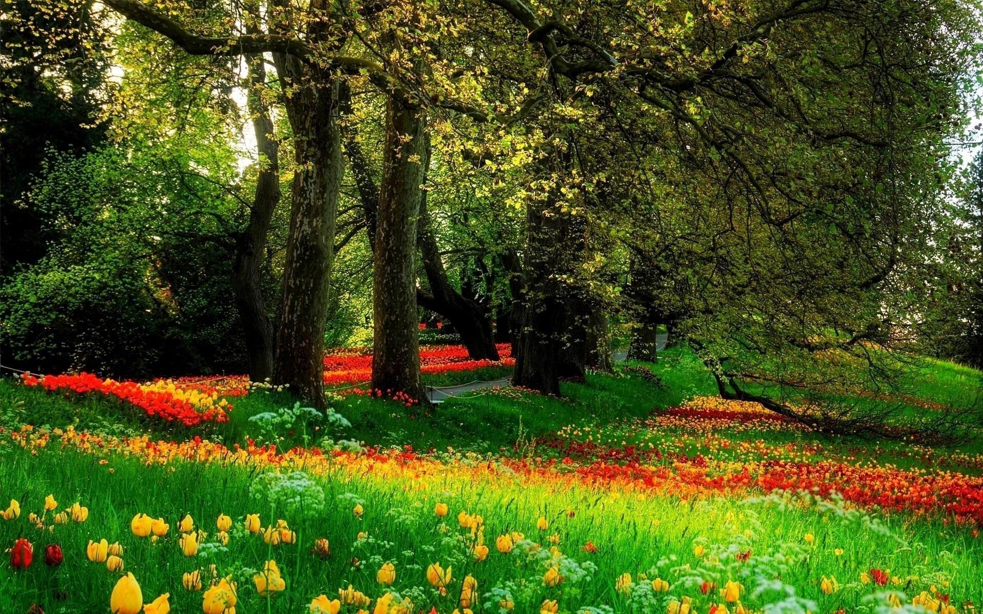 Beautiful Trees Amp Flowers Clean Cut Tree Experts Is One