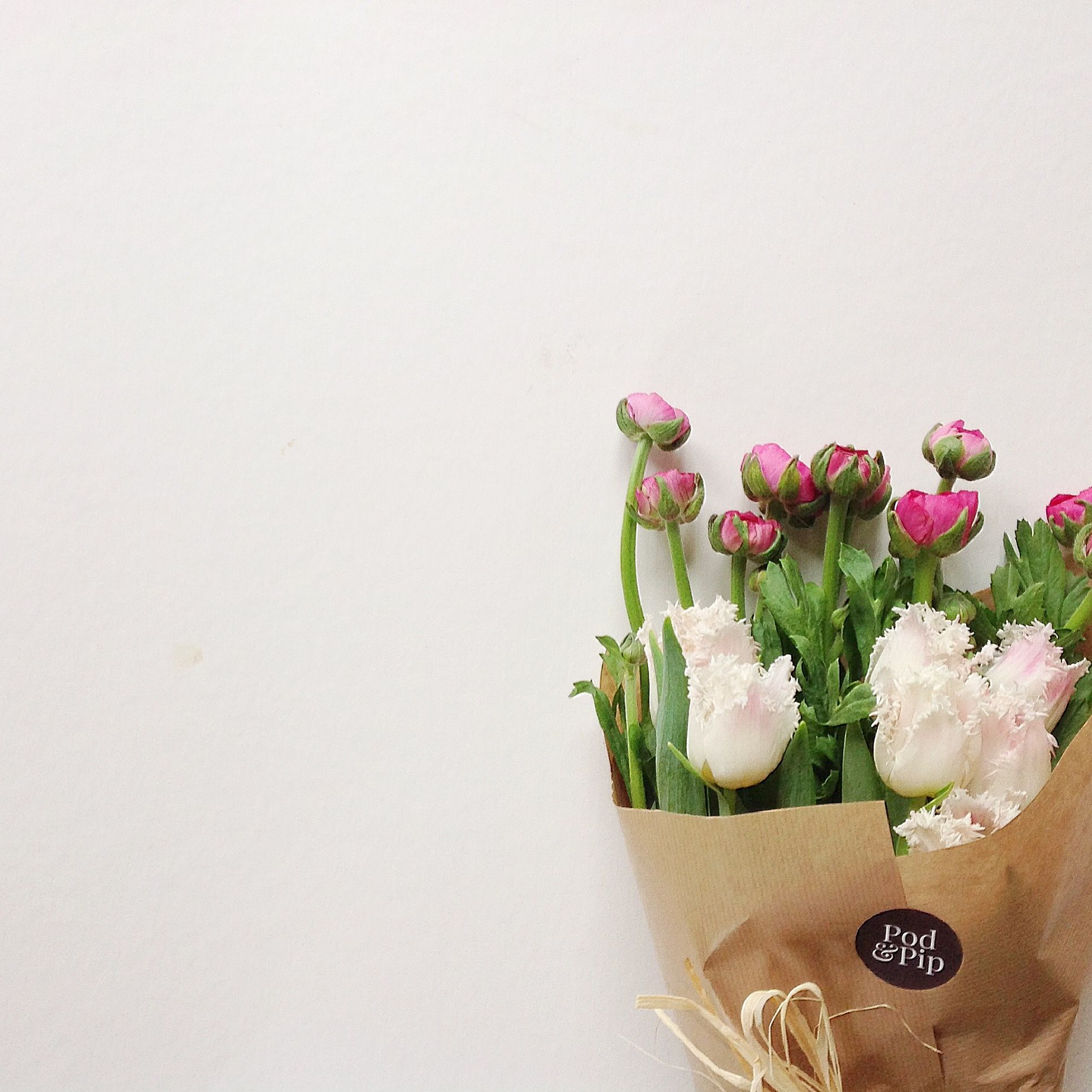 Pretty hot pink ranunculus with frilly white tulips make a beautiful order flowers delivered ready for the weekend from pod pip florists in salisbury wiltshire izmirmasajfo Images