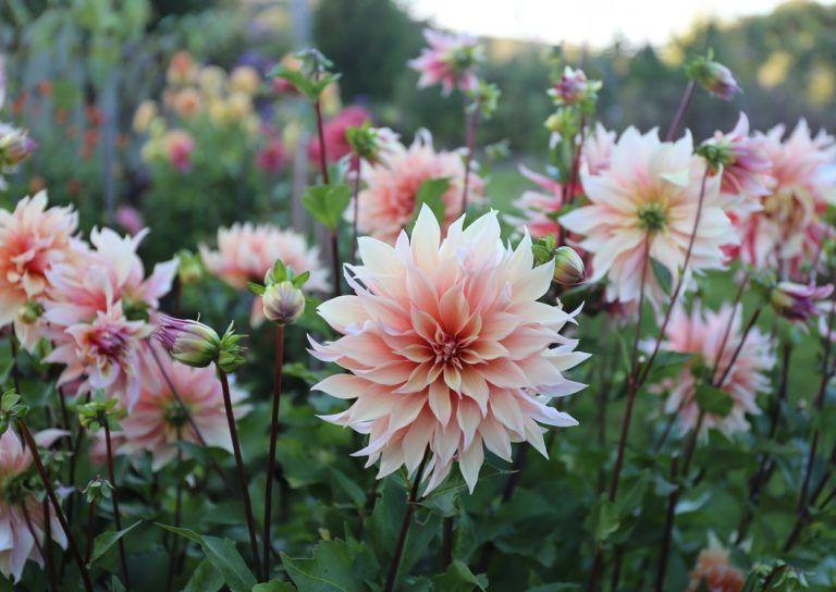 flower garden care #garden #gardencare How to Design a Backyard Cutting Garden - Longfield Gardens