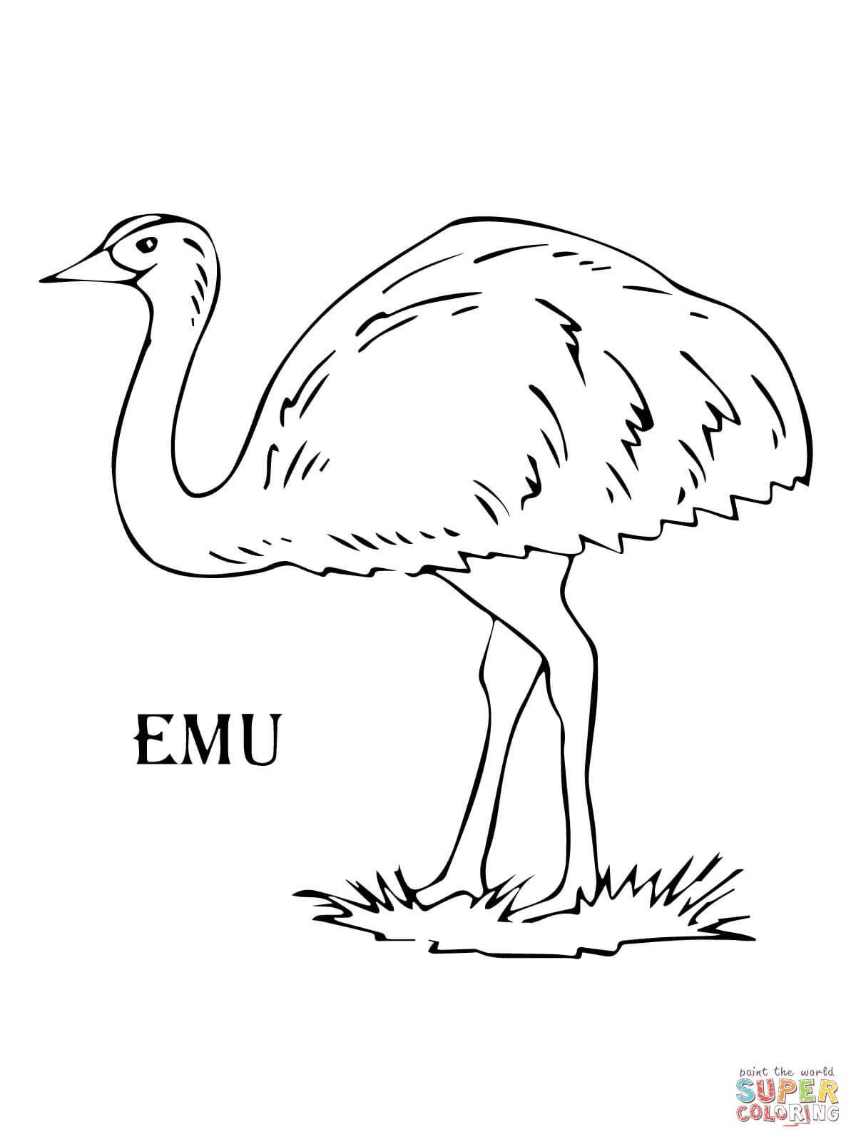 Resultado De Imagen De Emu Para Colorear