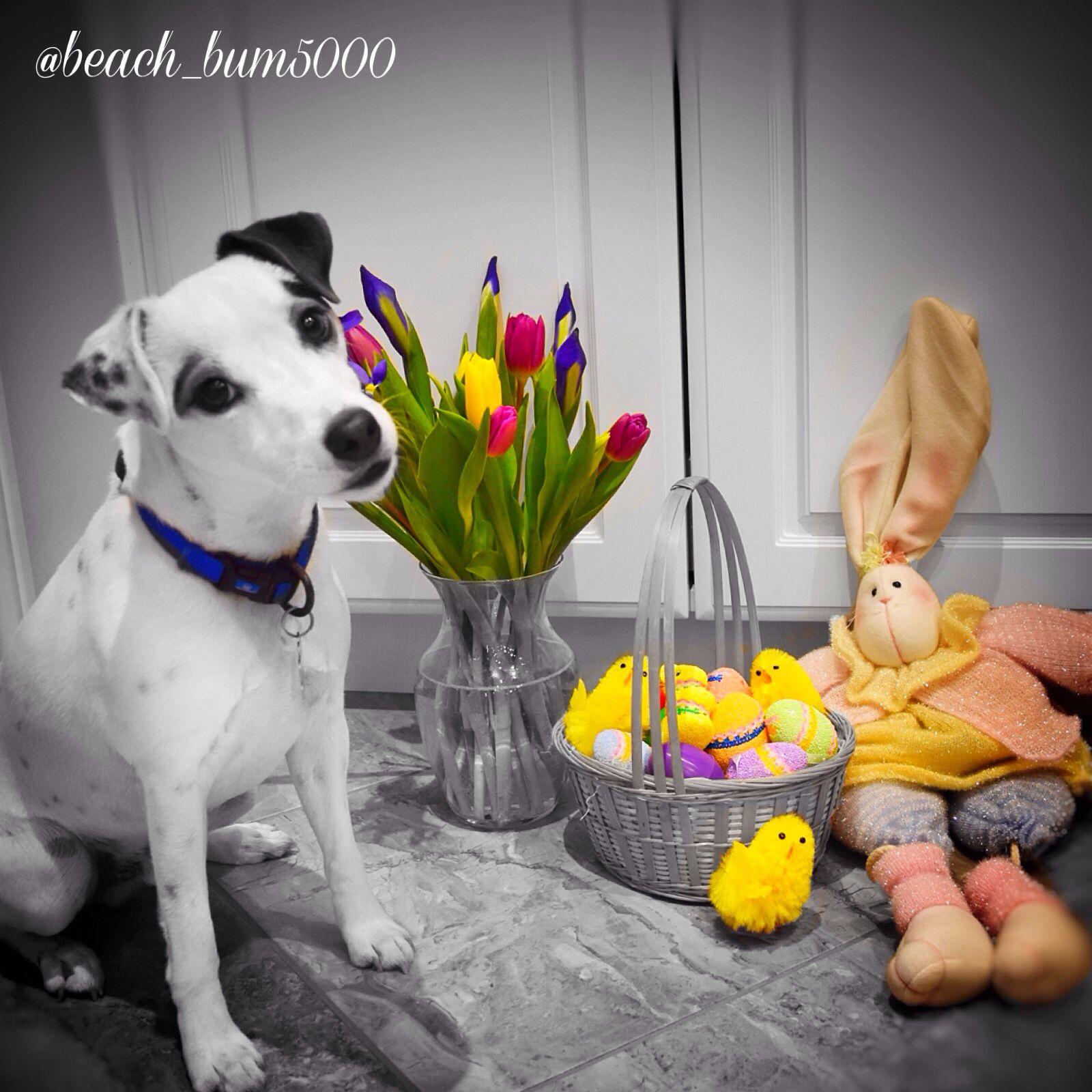 Dewey S Easter Pic Pets Cute Animals Instagram Beach