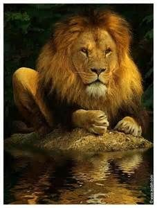 Lion Praying - Saferbrowser Yahoo Image Search Results