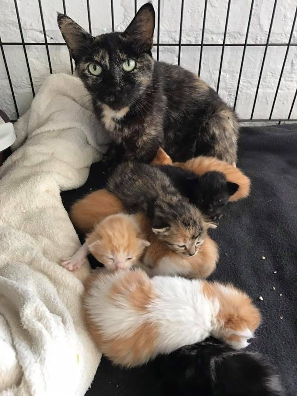 Man Saves Kittens And Refuses To Leave Without The Mom After Hours Of Waiting Kitten Mom Kittens Mama Cat