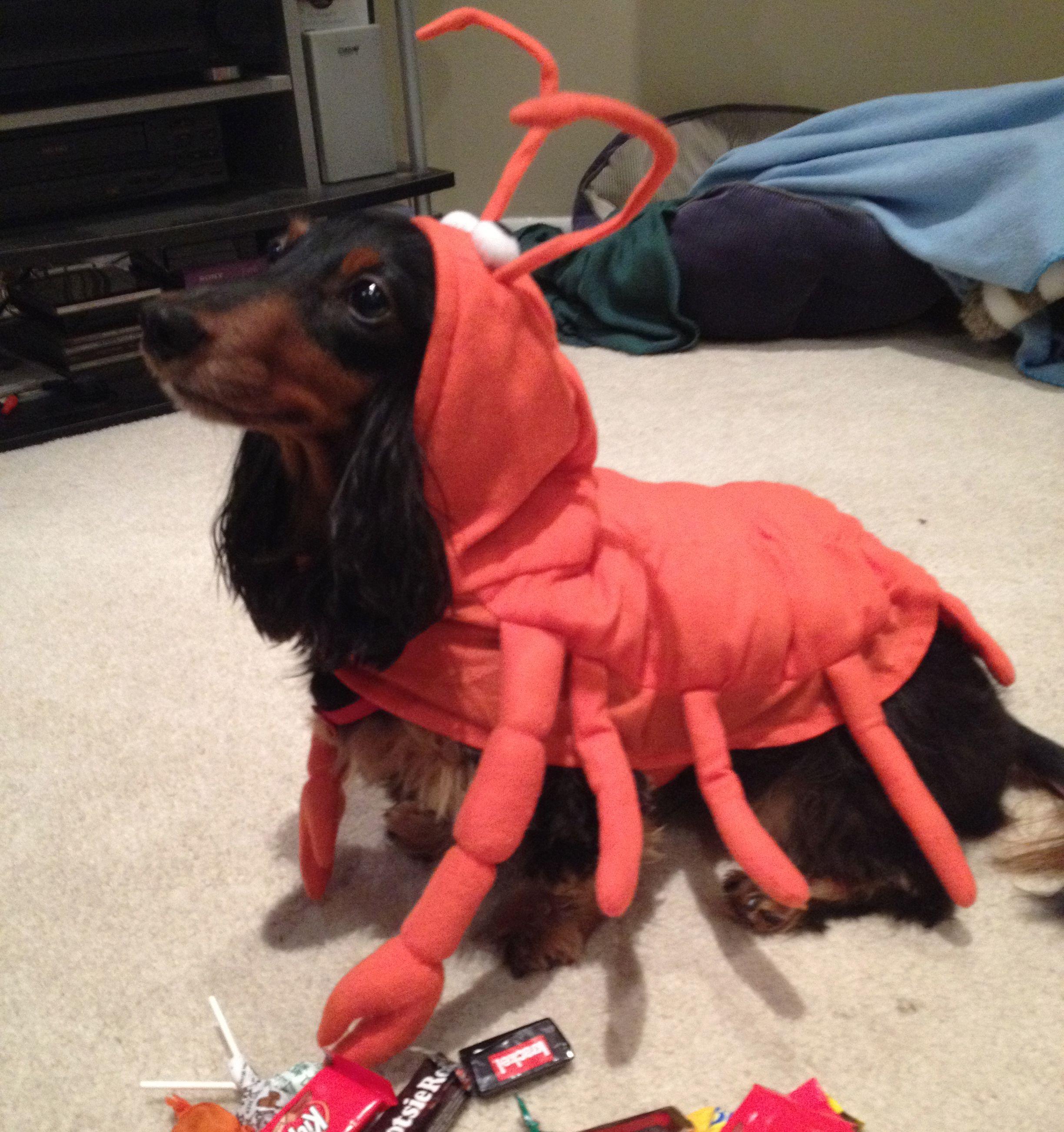 Best Halloween Costumes Of 2012 Dog Halloween Costumes