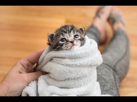 Kitten Lady S Top 5 Tips For Comforting A Baby Kitten Cats And