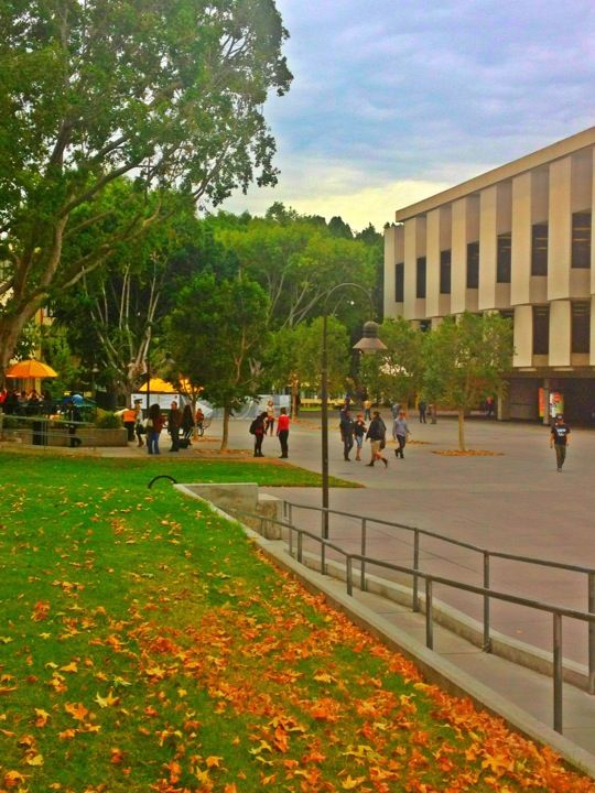 California State University Los Angeles Csula California State Los Angeles California