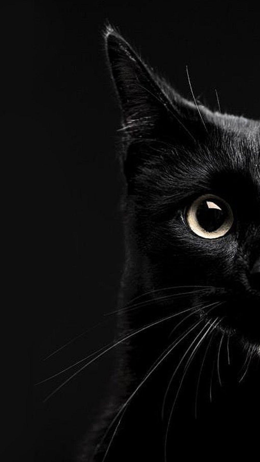 Black Cat Wallpaper Hd Iphone In 2020 Iphone Wallpaper Cat Cat Background Cute Cat Wallpaper