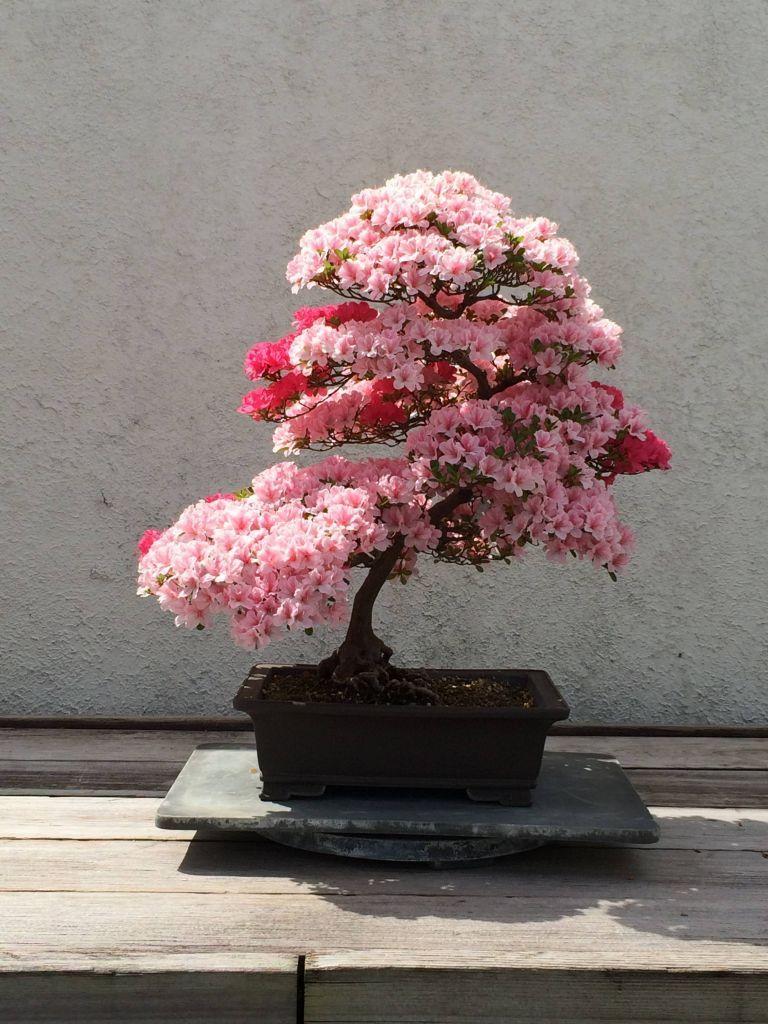 bonsai workshop near me