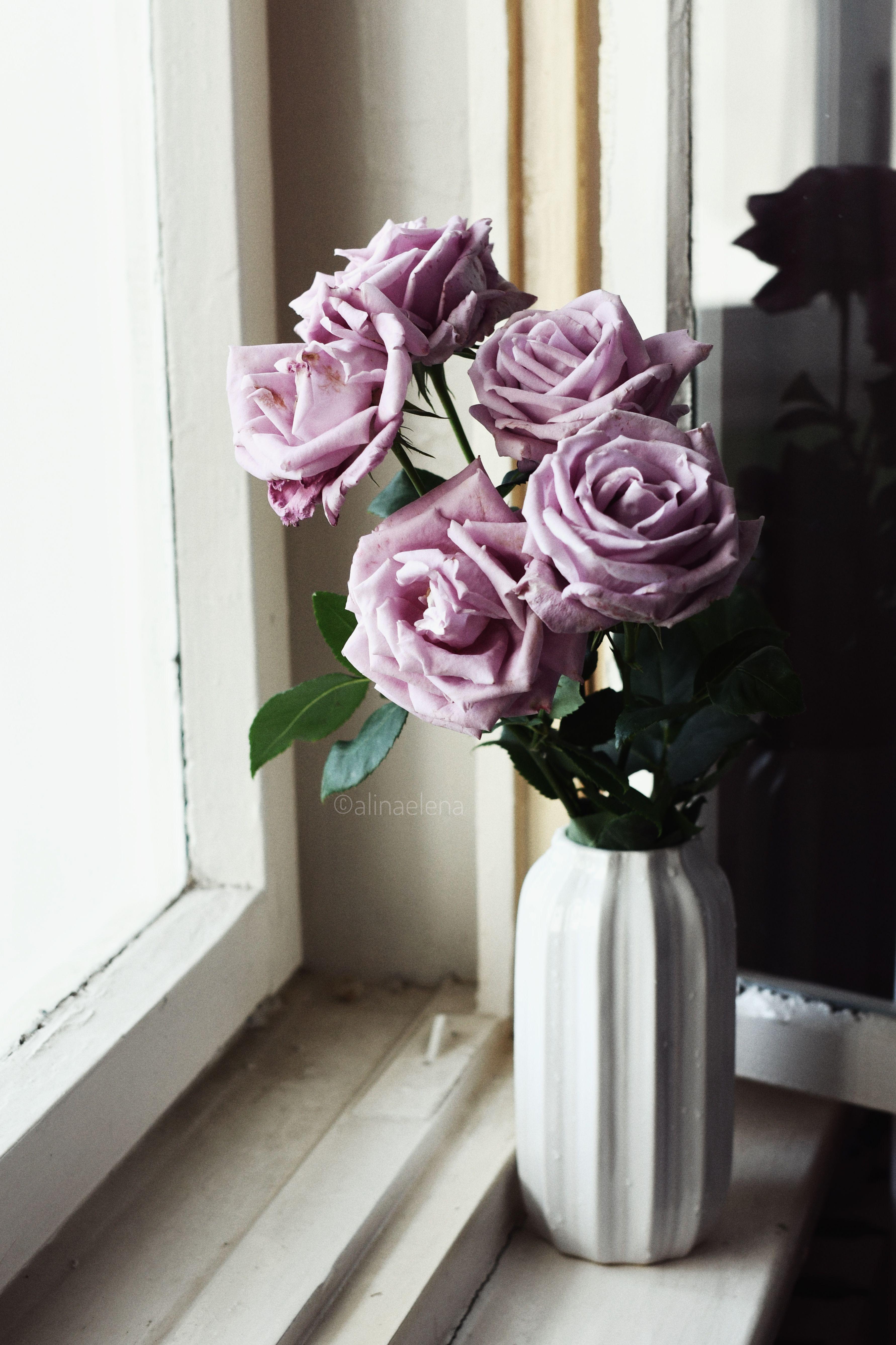 #roses #flowers #purple #purpleroses #flowerlover