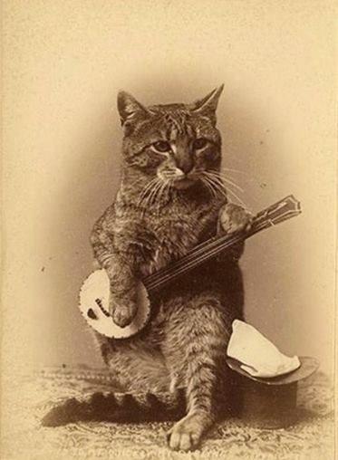 nbd. music cat Vintage cat, Steampunk cat, Cats