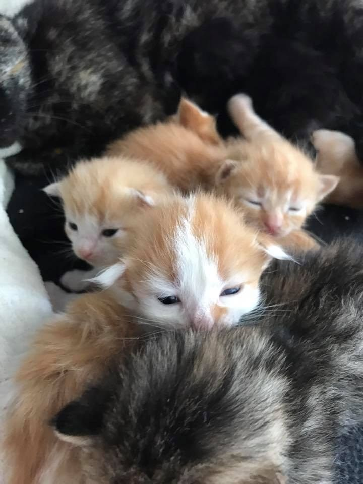 Man Saves Six Kittens And Refuses To Leave Without The Mom After Hours Of Waiting Cute Little Kittens Kittens Cats And Kittens