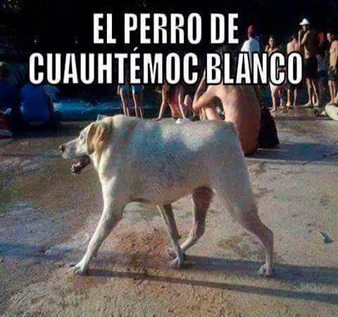 El Perro De Cuauhtemoc Blanco Perros Divertido Humor Grafico