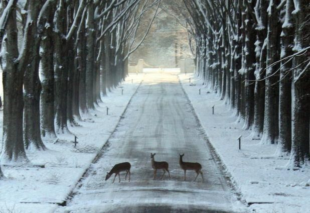 Deer At Berry College In 2020 With Images