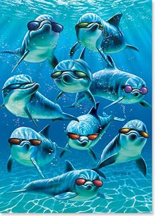 Birthday card dolphins leanintree greeting cards birthday card dolphins leanintree m4hsunfo