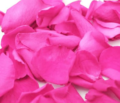 Hot pink rose petals hot pink roses rose petals and pink roses mightylinksfo