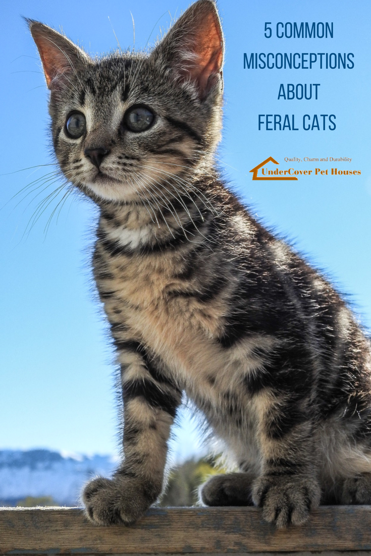5 Common Misconceptions About Feral Cats Cute Animals Feral
